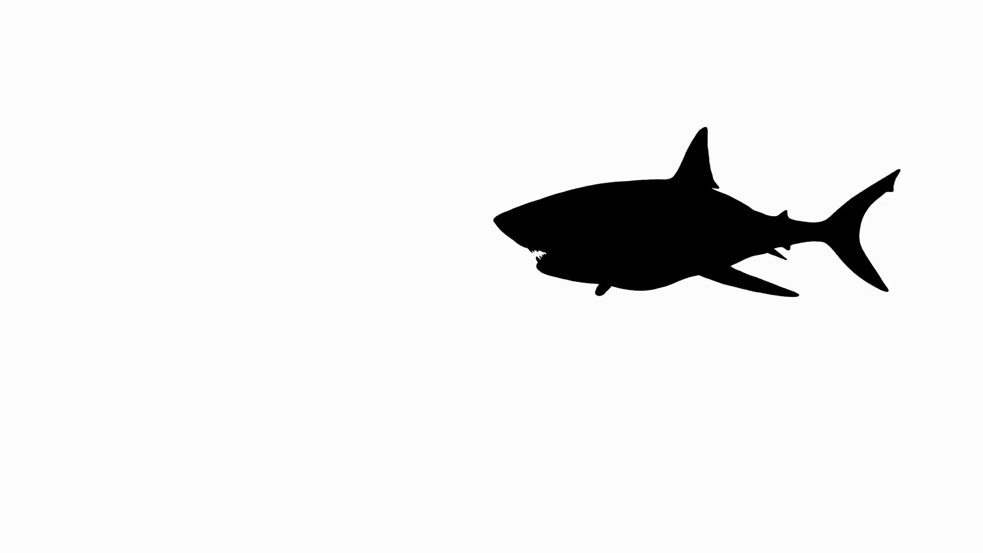 1920x1080 Animated Silhouette Of A Great White Shark Attack. Includes Alpha