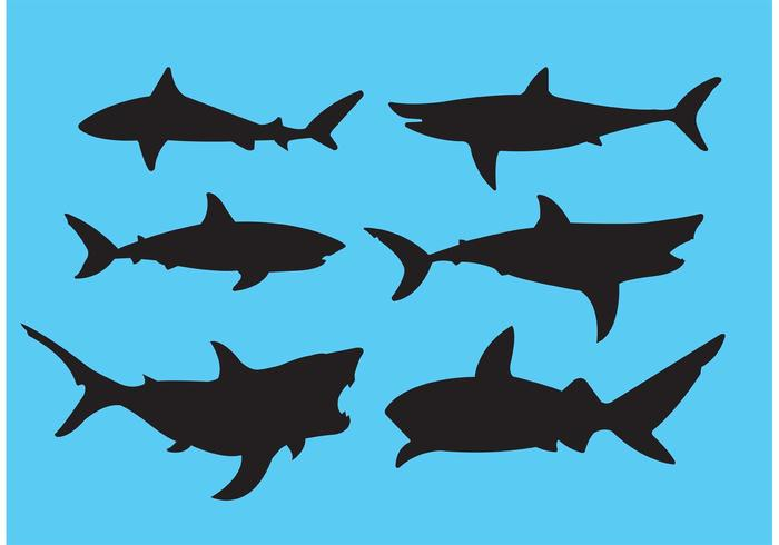 700x490 Shark Icon Free Vector Art