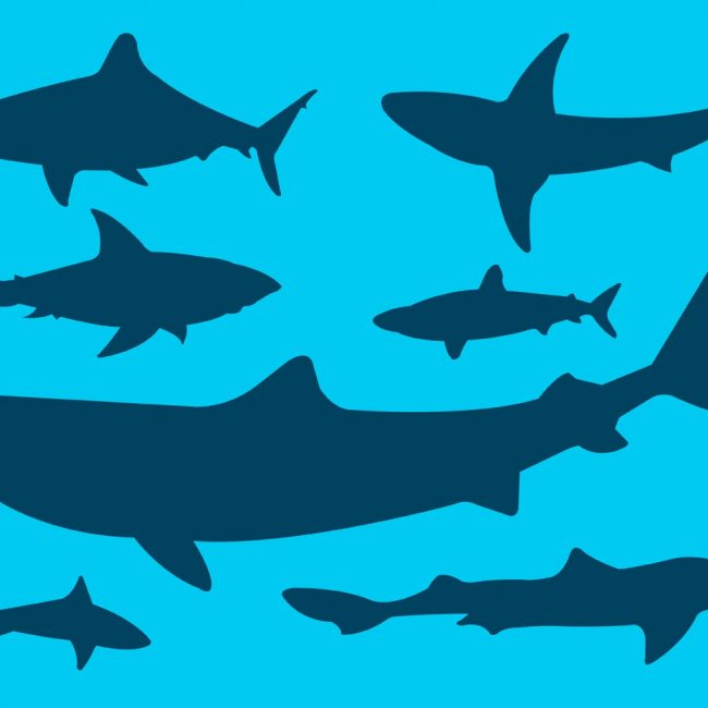 650x650 Free Vector Vector Collection Of Shark Silhouettes