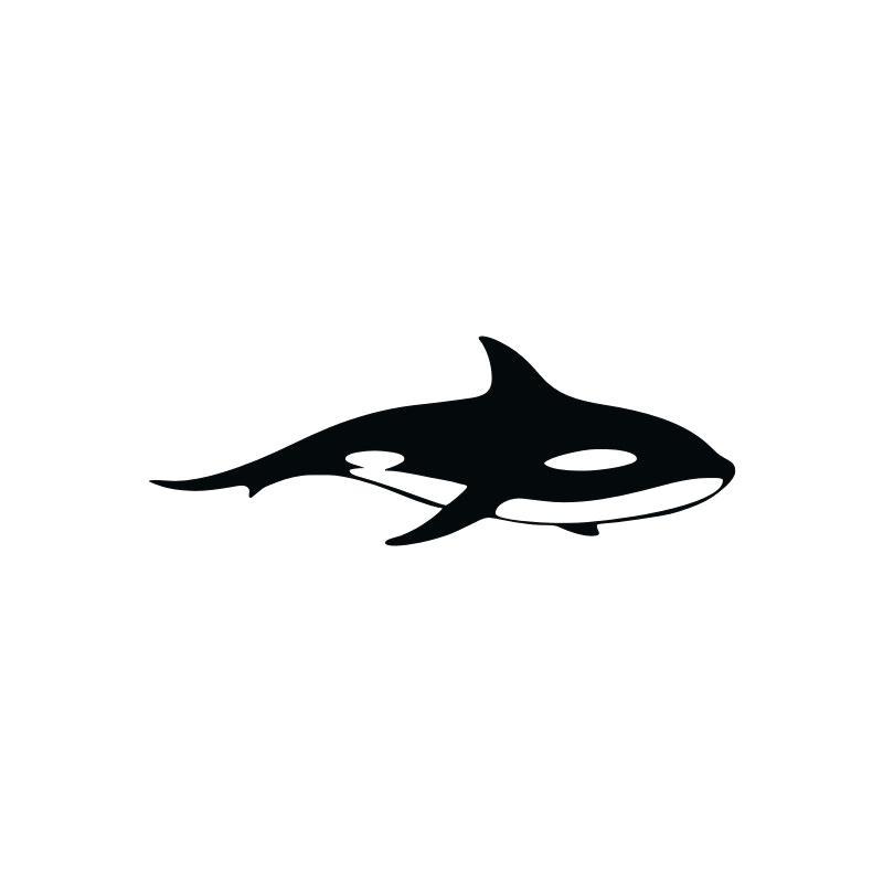 800x800 Free Cartoon Shark Shark Outline And Shark Silhouette Shark