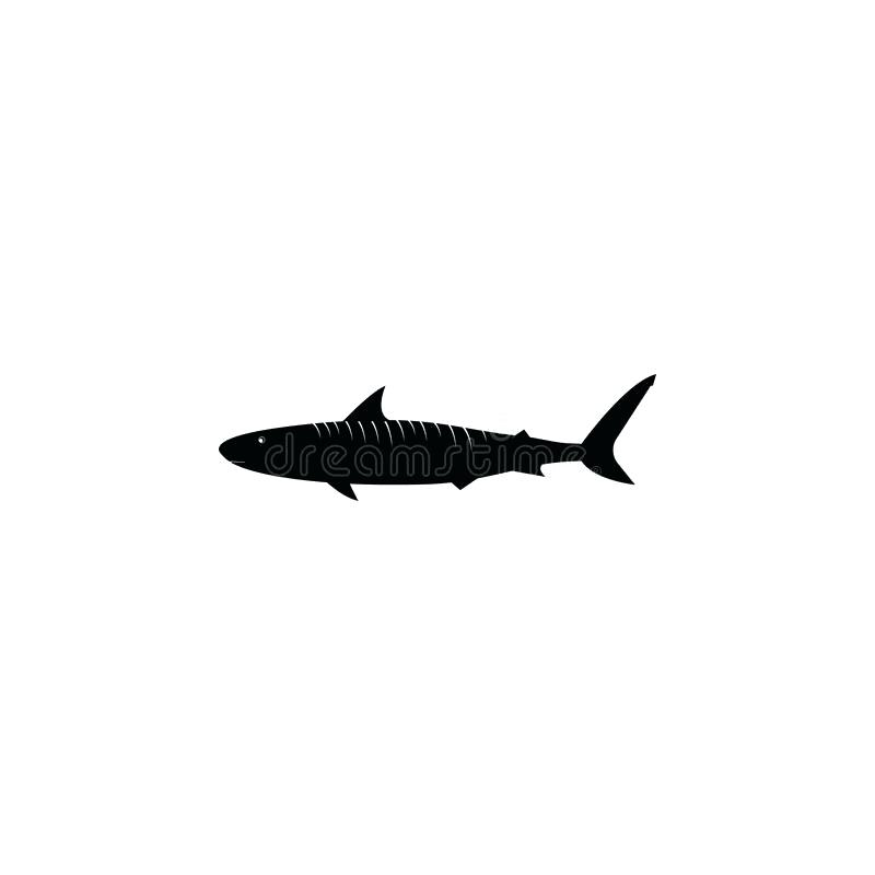 800x800 How To Draw A Shark Lessons Great White Shark Outline Shark