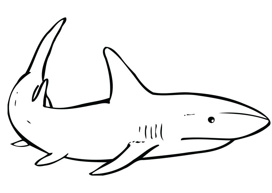875x620 Shark Coloring Pages Great White Shark Coloring Pages Pictures