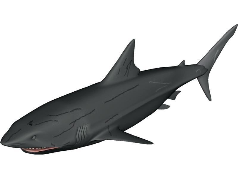 800x600 Great White Shark Outline