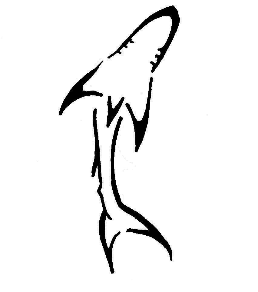 852x964 Shark Back Marine Conservation In Volunteer Vacations Shark Week