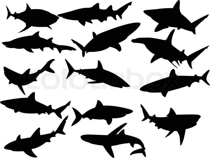 800x600 Shark Shadow Images