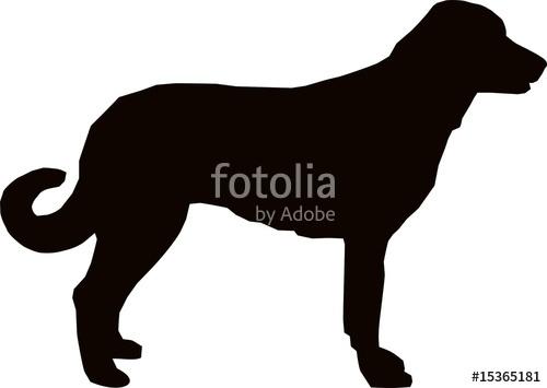 500x355 Anatolian Shepherd Dog Stock Image And Royalty Free Vector Files