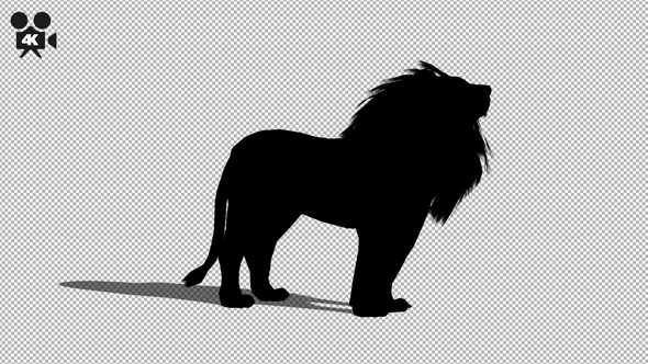 590x332 4k Lion Silhouette Howl By Handrox G Videohive