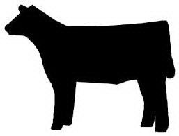 Show Calf Silhouette