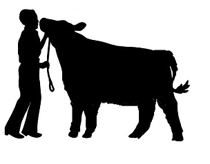 304x238 Gavin B Keymann Memorial Livestock Show Purple To Win Tribune, Ks