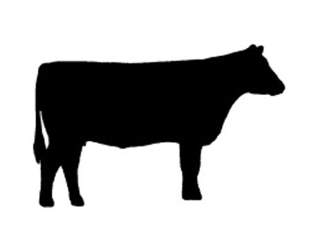 473x355 Angus Cow Cattle Decal Vinyl Sticker Car Van Laptop Silhouette