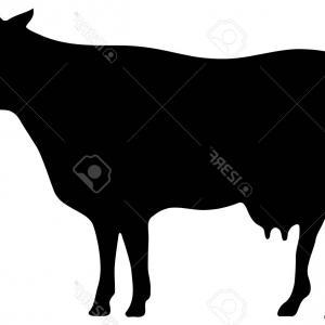 300x300 Cute Cows Relaxing In Silhouette Gm Lazttweet