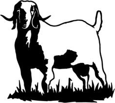 236x213 Club Show Lambs Clipart Market Goat Amp Lamb Show Program