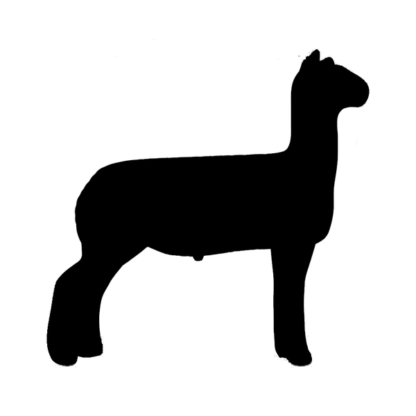 600x600 Show Lamb Outline Free Images