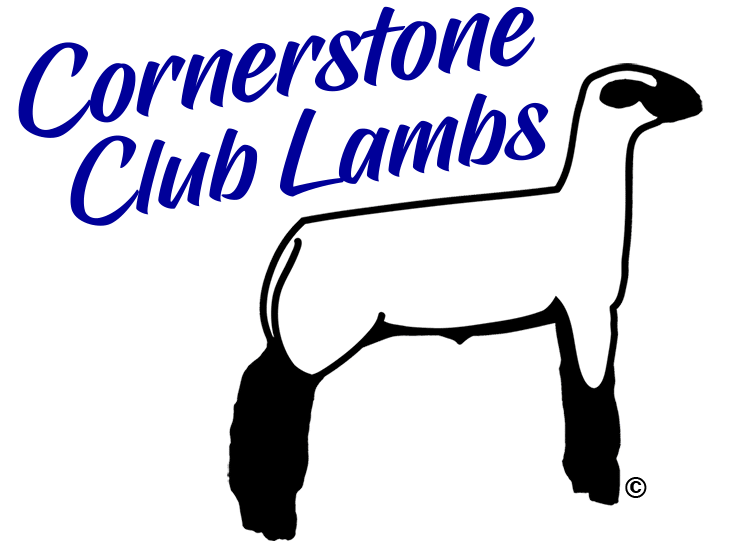 736x541 Show Lambs Amp Sheep For Sale Cornerstone Club Lambs, Virginia