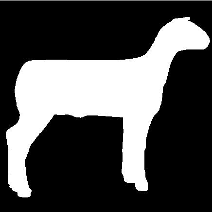 436x437 Club Show Lambs Clipart 315 6 Inch Sheep.jpg (11040 Bytes