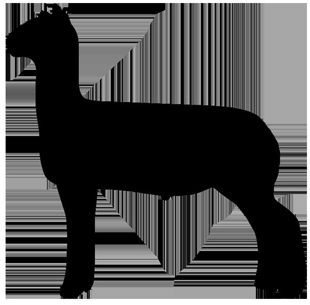 609x600 Free Show Lamb Clip Art Sheep Graphics Clublamb Images