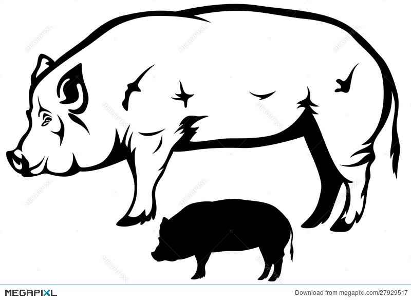 800x584 Pig Vector Illustration 27929517