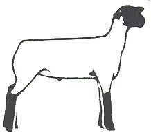 Show Sheep Silhouette