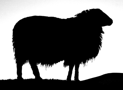 500x364 Lamb Clipart Silhouette