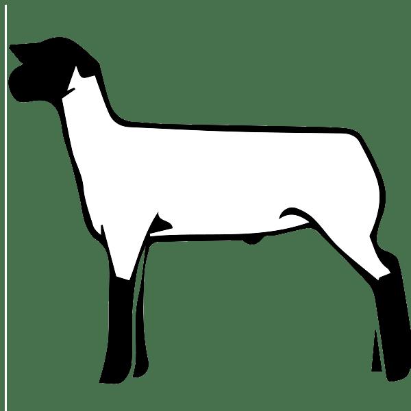 600x600 Free Show Lamb Clip Art Sheep Graphics Clublamb Images