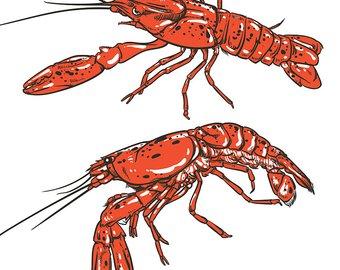 340x270 Shrimp Drawing Etsy