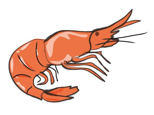 640x480 The Top 5 Best Blogs On Shrimp Silhouette Clip Art