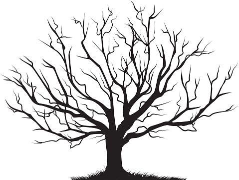 479x360 Deciduous Bare Tree Empty Branches Black Silhouette Vector Art