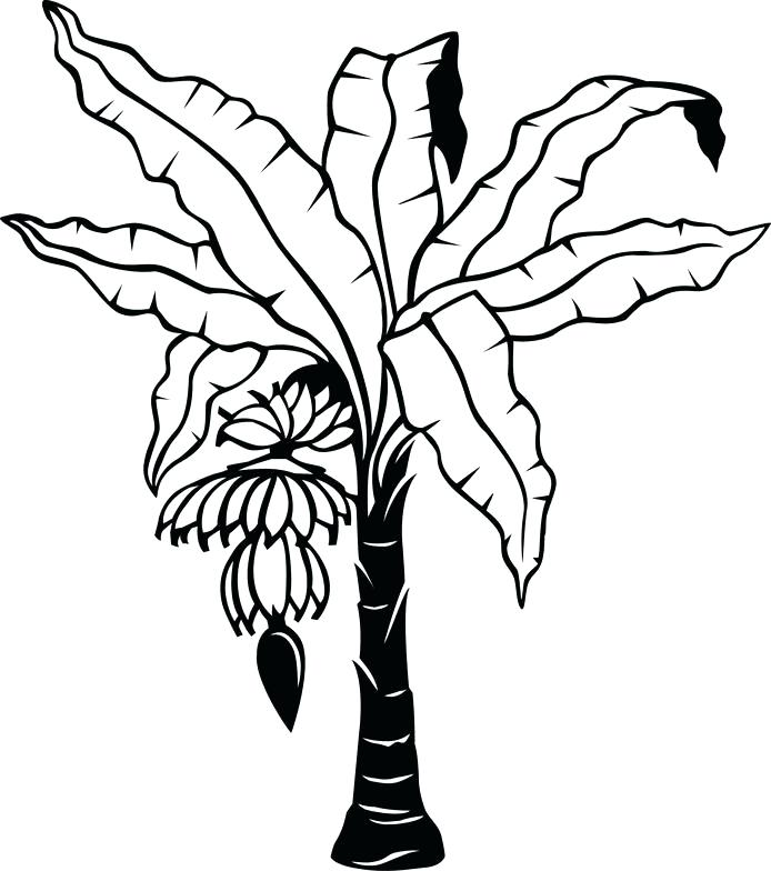 694x784 Outline Tree Plant Aloe Shrub Botany Vector Trees Pine Tree