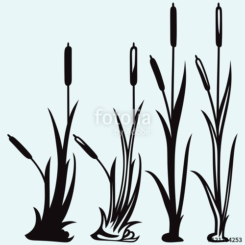500x500 Silhouette Reed Isolated On White Background Stock Image