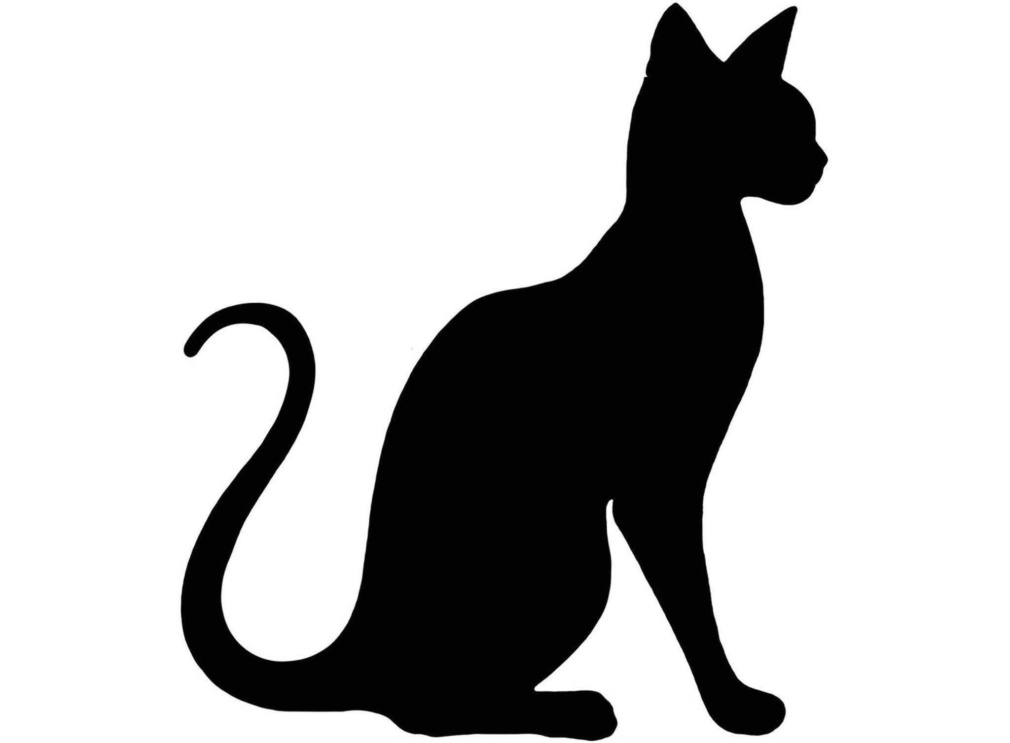 2048x1507 Cat Select A Breed 4 Pcs 2 Black