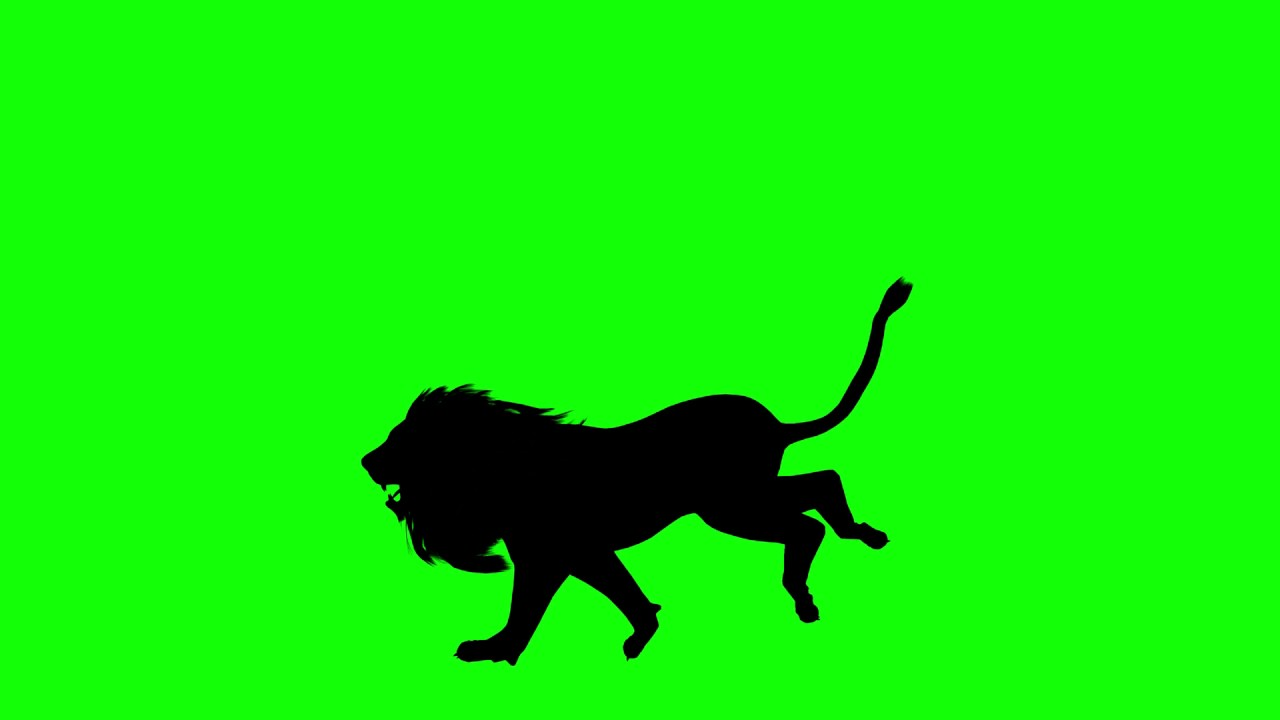 1280x720 Free Hd Video Backgrounds Animal Silhouette Lion Running