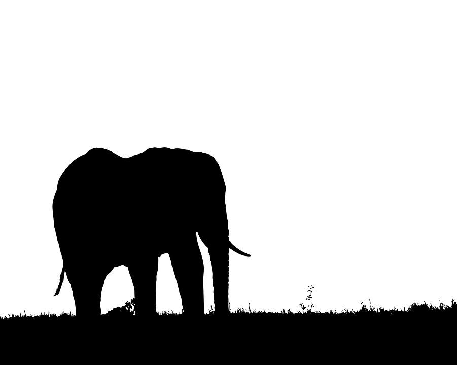 901x720 Free Photo Silhouette Symbol Elephant Animal Profile Nature