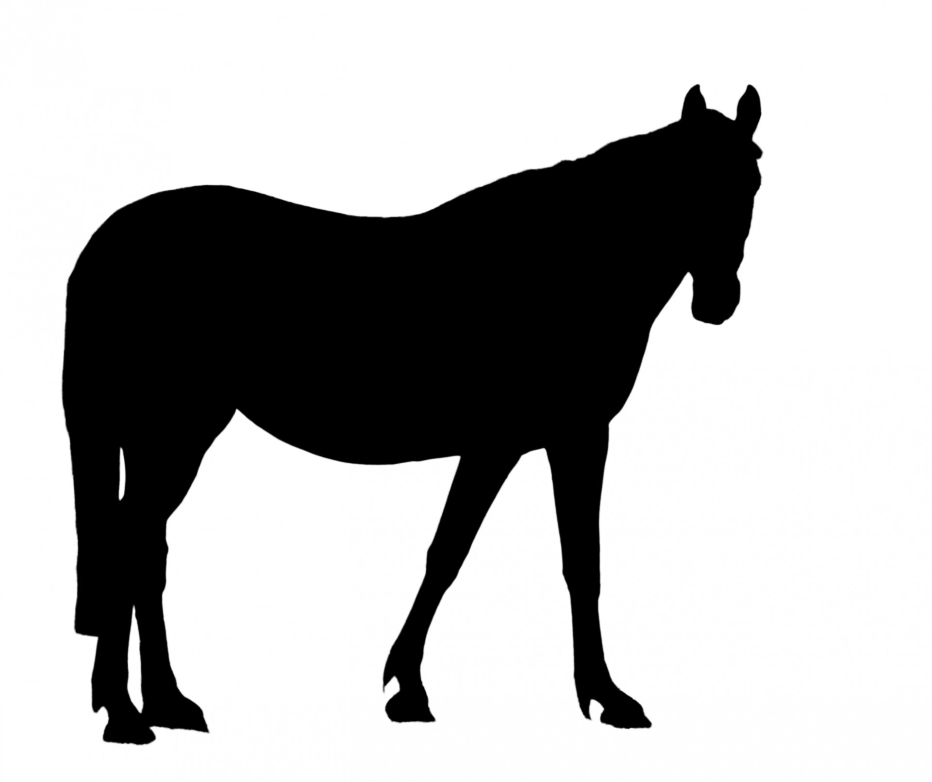 1920x1612 Black Horse Silhouette Clipart Free Stock Photo