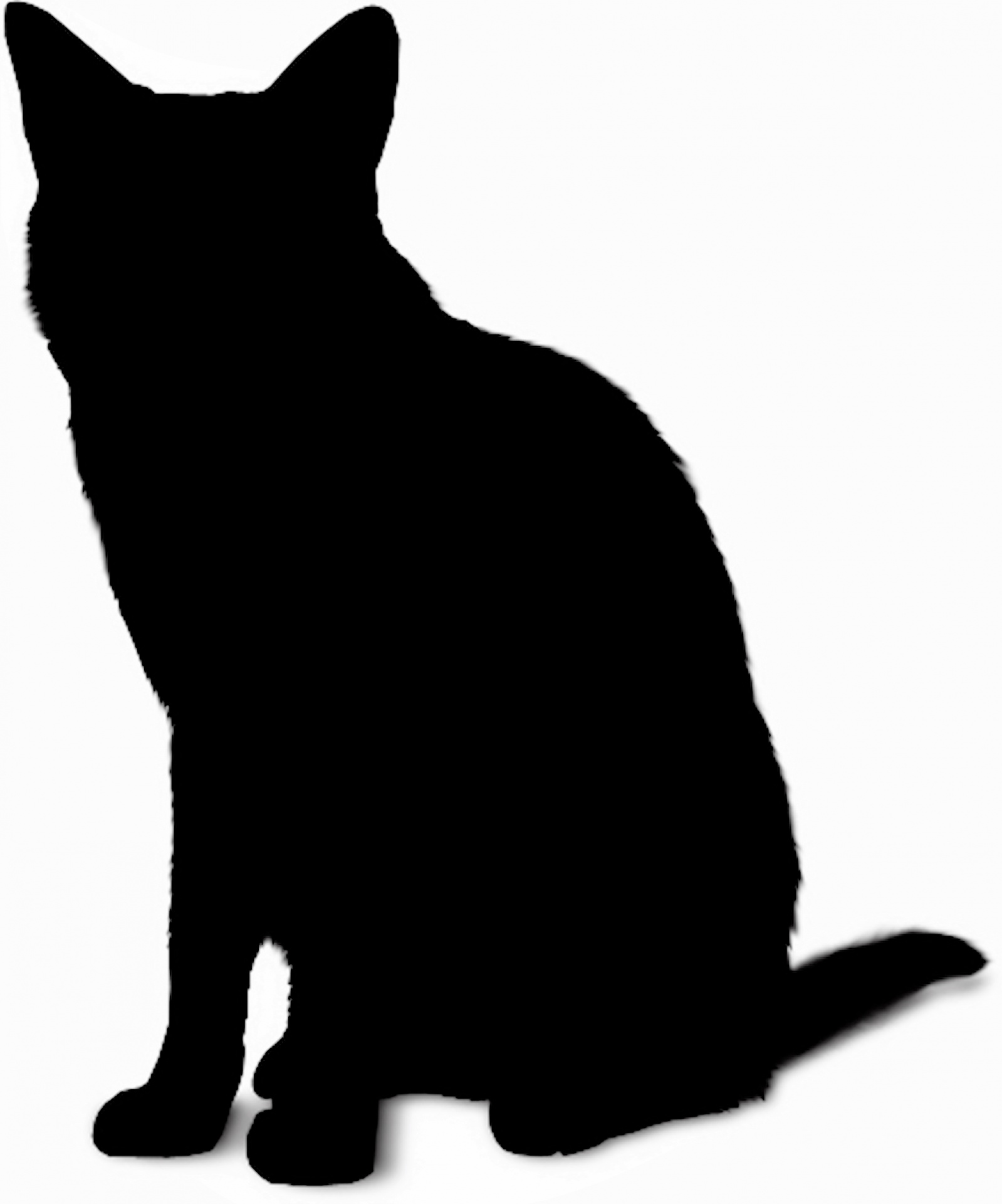 1599x1920 Silhouette Cat Free Stock Photo