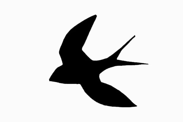600x400 Barn Swallow Facts