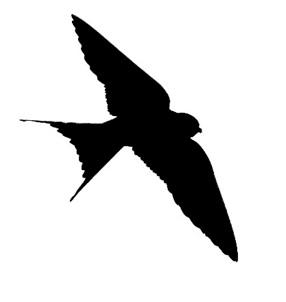 286x302 Cliff Swallow