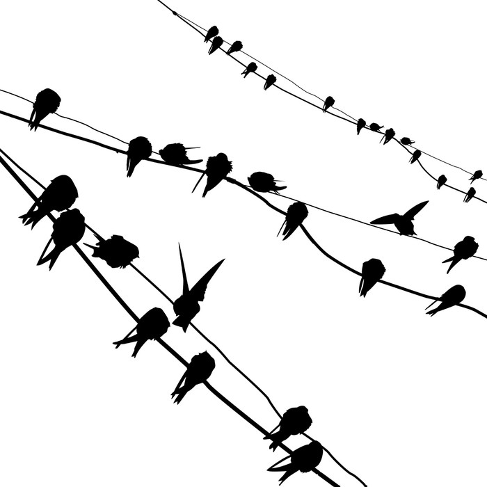 700x700 Silhouette Migrating Swallow Reposing On Electric Wire Wall Mural