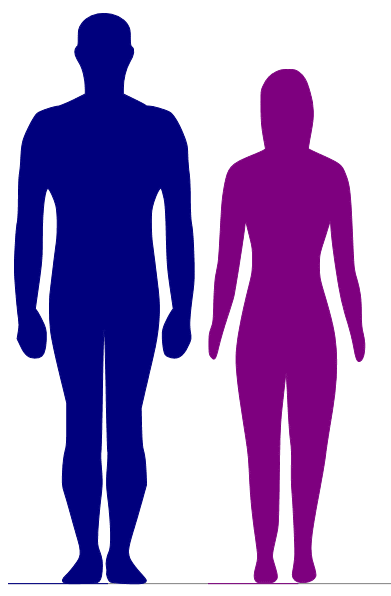 391x596 Comparing Heights Which Displays Differences In Body Shape