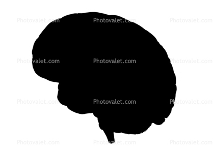 418x299 Brain Silhouette, Logo, Shape Images, Photography, Stock Pictures