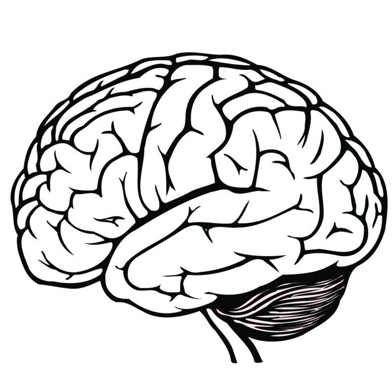776x768 Clipart Silhouette Of A Brain