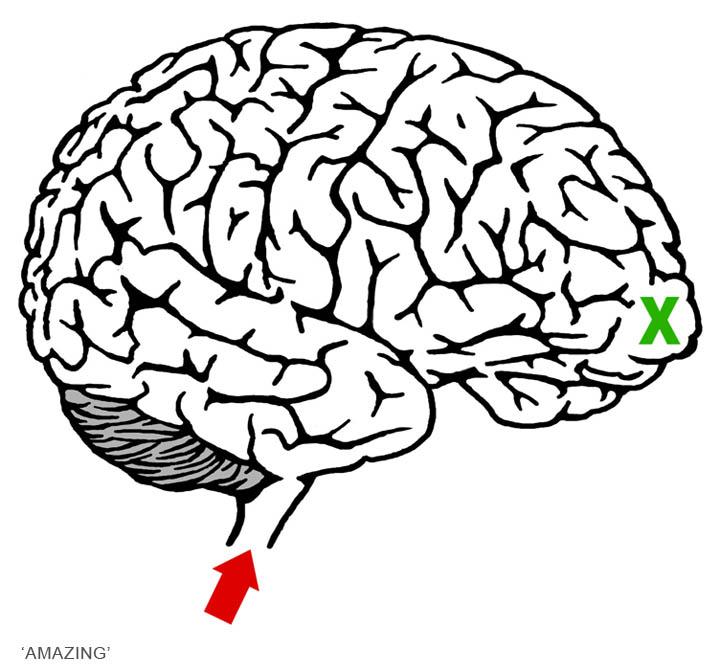 720x672 Maze Clipart Brain 3701023