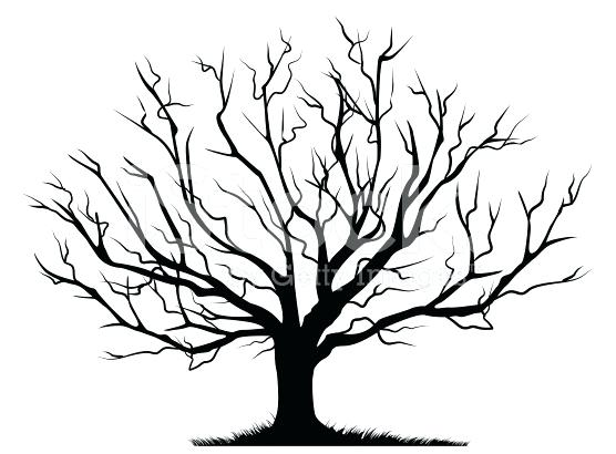 556x410 Branch Tree Template Bare Tree Outline Coloring Page Bare Tree