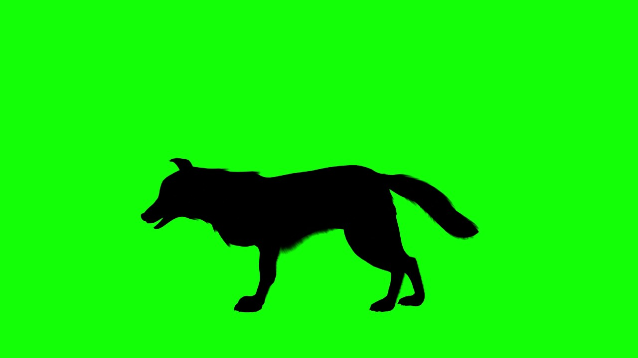 1280x720 Free Hd Video Backgrounds Silhouettes Wolf Standing