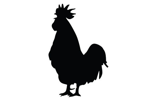 500x350 Chicken Silhouette Vector Chicken Silhouette Clip Art 500 350