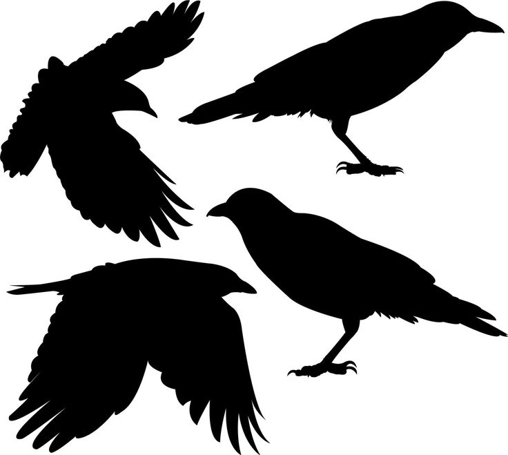 736x659 Crow Clipart Awesome