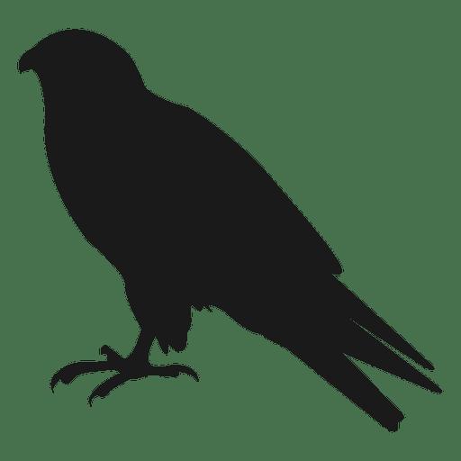 512x512 Crow Silhouette