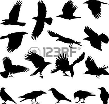 350x337 Crows Black Isolated Silhouettes Of Carrion Crow On The White