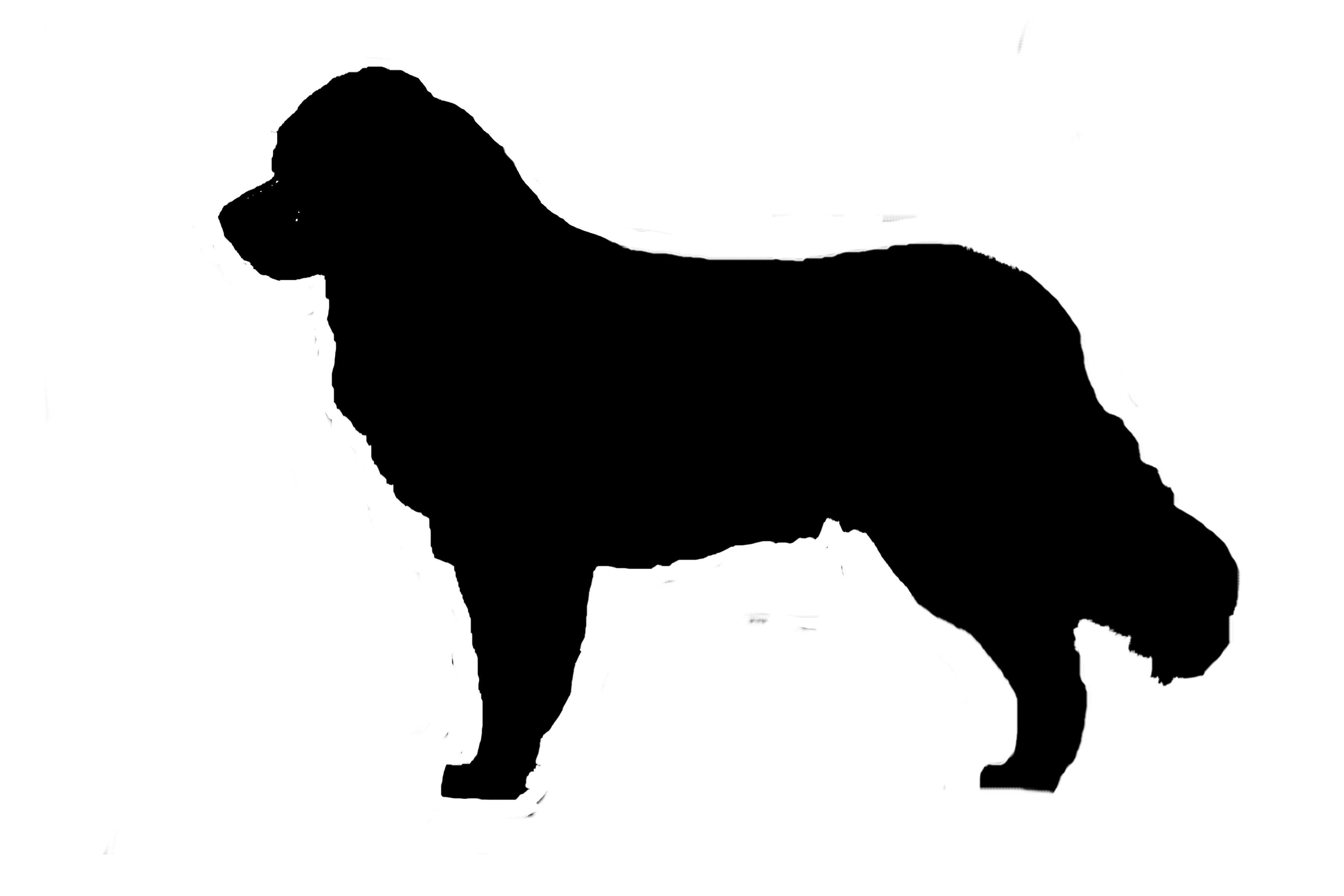 3888x2592 Bernese Mountain Dog Silhouette Vinyl Sticker Decal