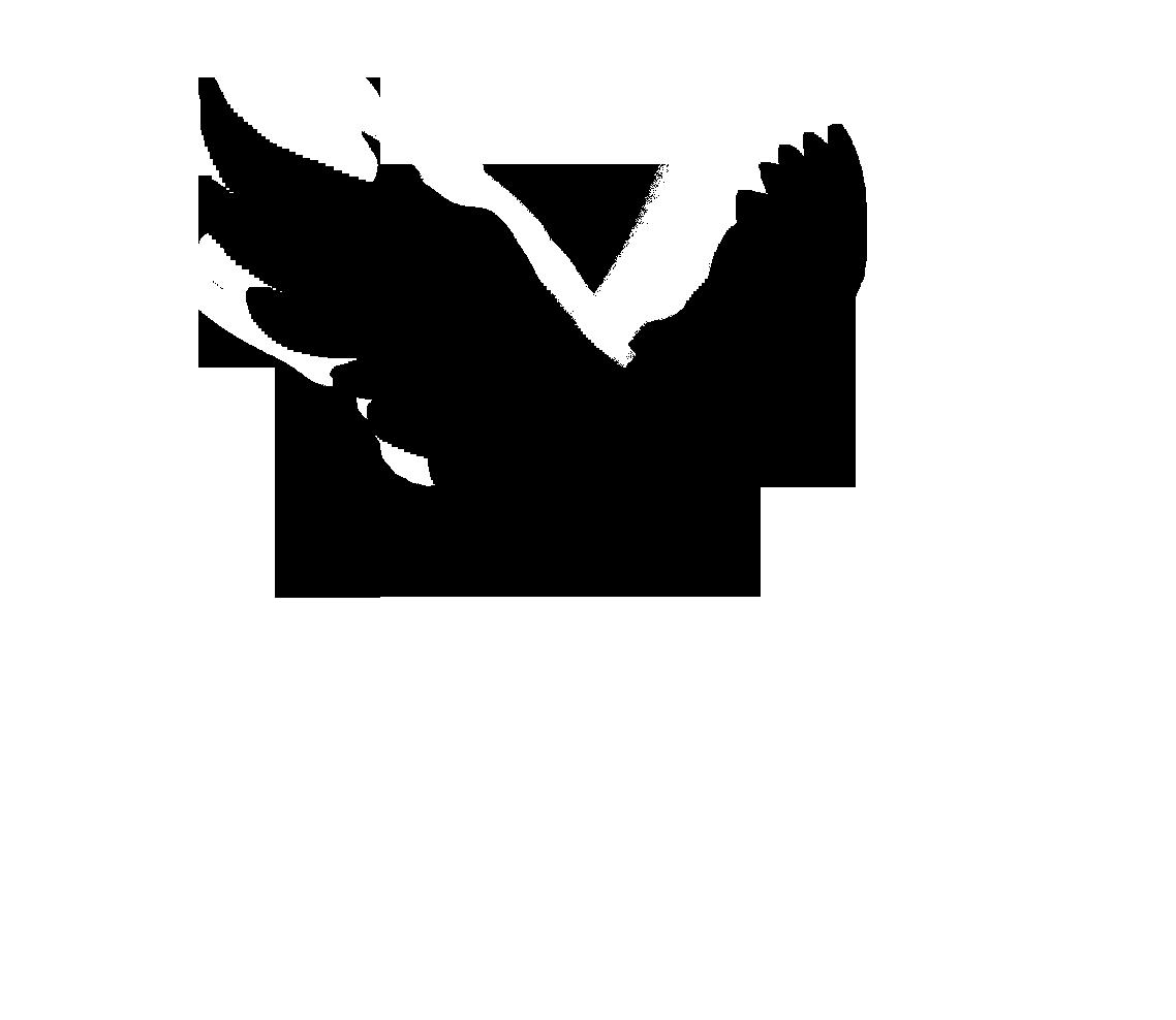 1138x988 Drawn Dove Flight Silhouette