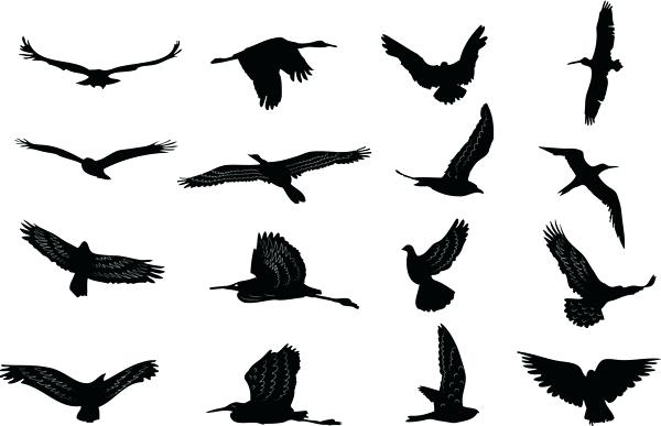 600x387 Dove Outlines Flock Of Birds Silhouette Vector Dove Tattoo Designs